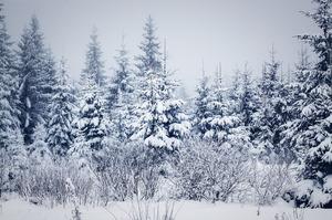snowy winter landscape_pixta_26334626.jpg